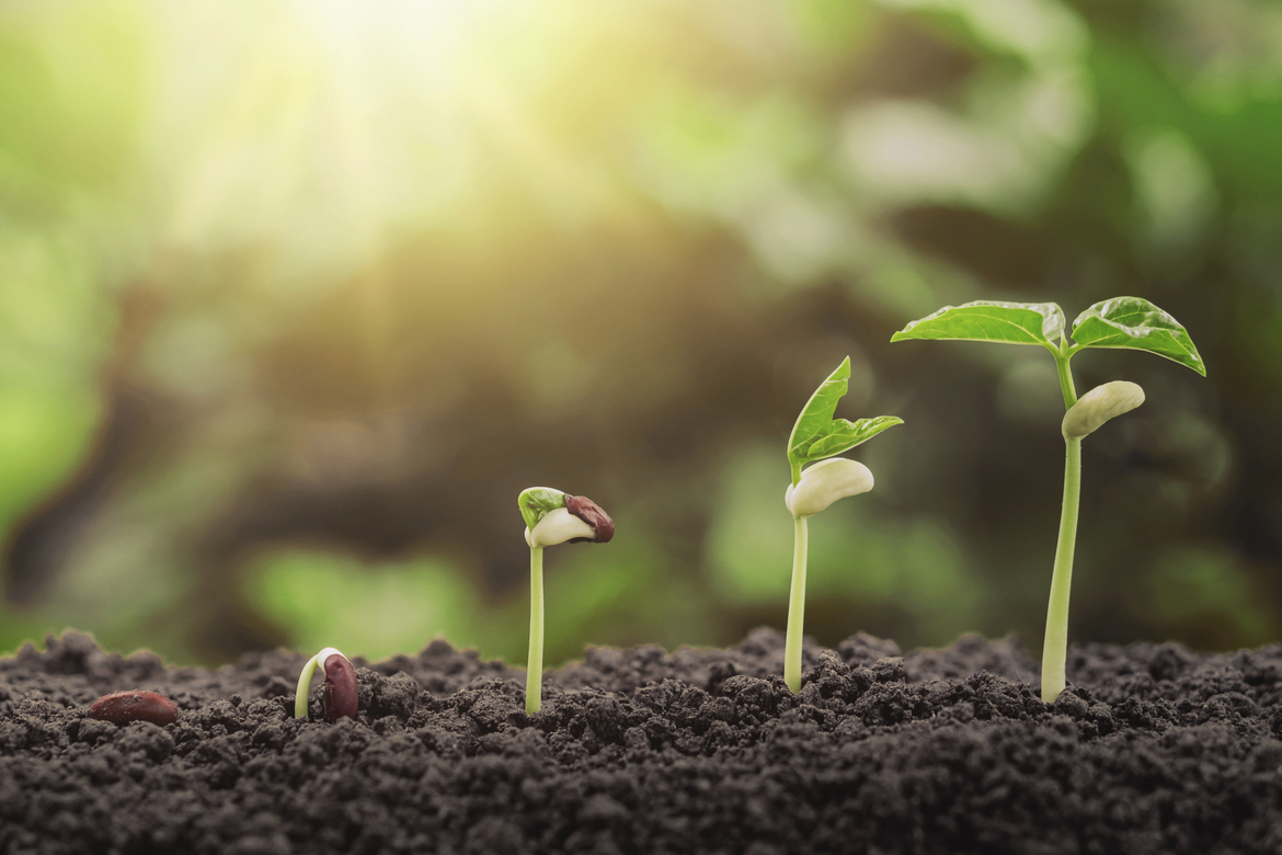 Diversifying Your Real Estate Portfolio Into Agriculture