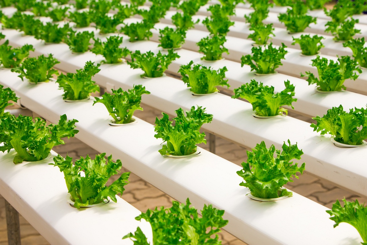 Indoor Agriculture and Opportunities in the Declining Retail Sector